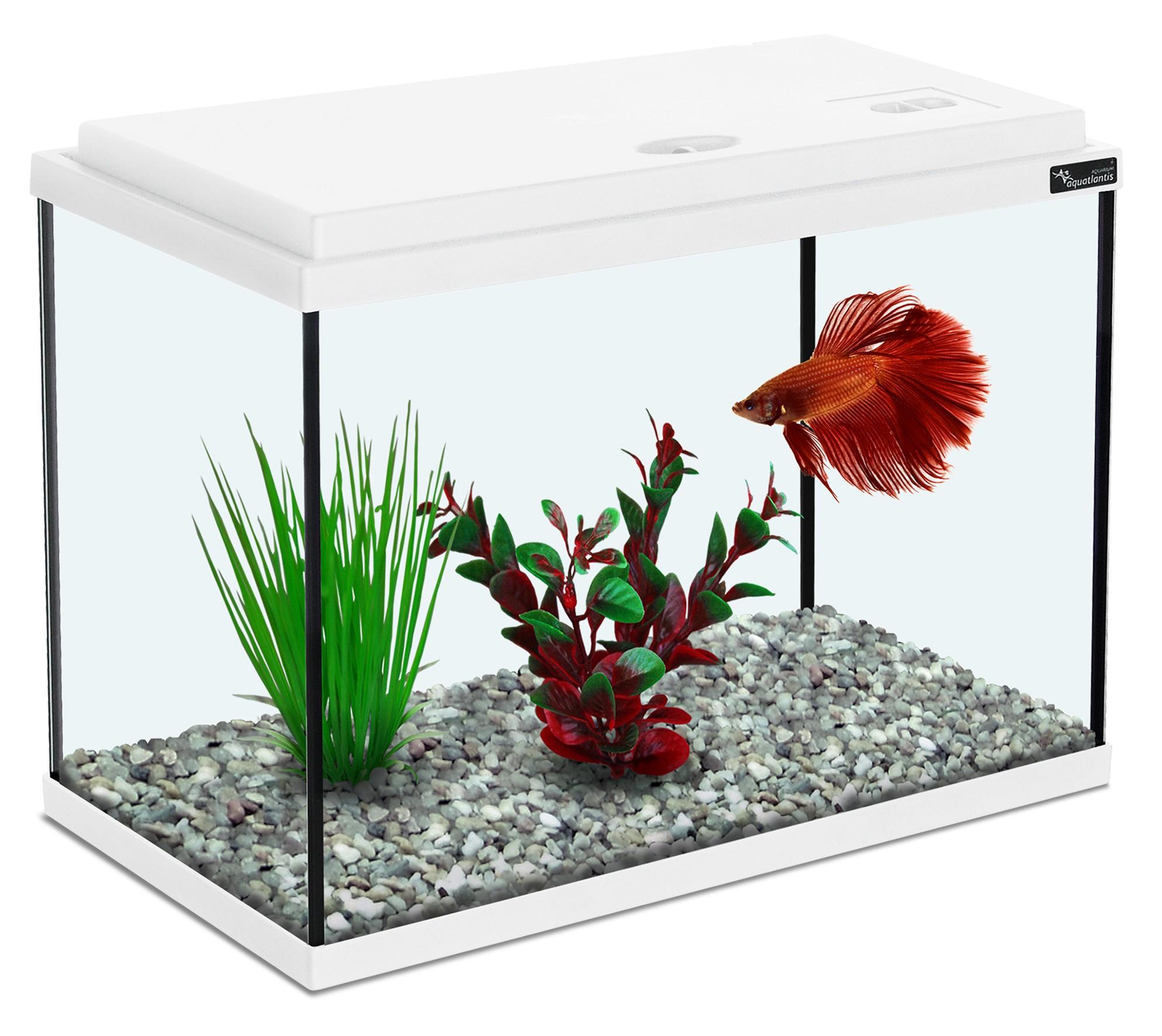 Aquarium 13.8L blanc