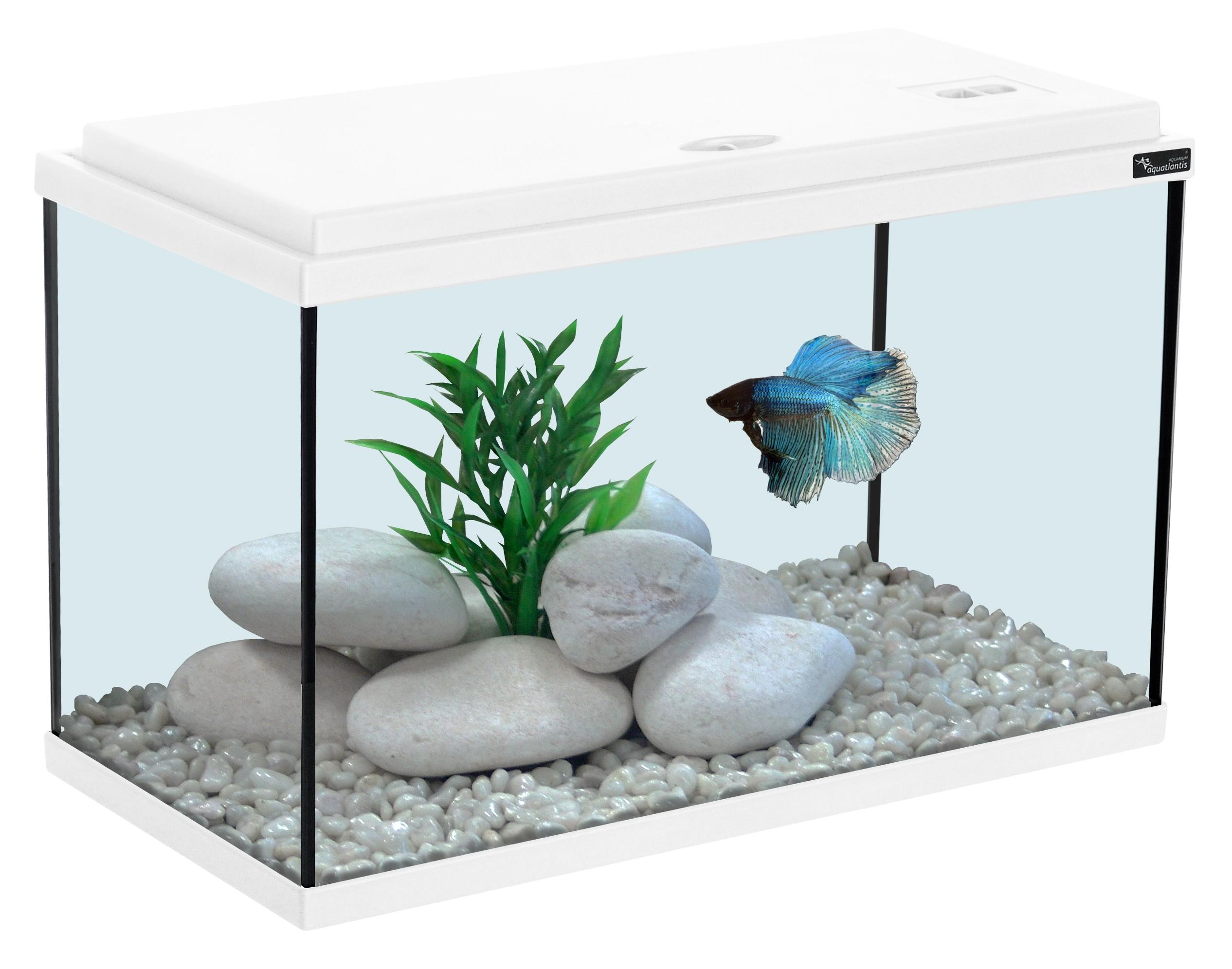 Aquarium 20L blanc