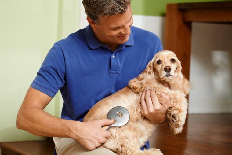 Grande brosse pour chien à aiguilles en plastique Oster 102340
