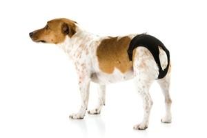 Culotte hygiénique t.2 pour chien noire Doggli  Savic 196689
