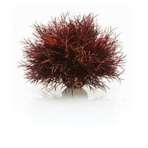Décoration aquarium Crimson Sea Lily biOrb