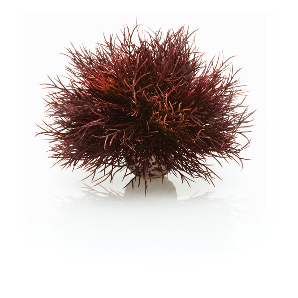 Décoration aquarium Crimson Sea Lily biOrb 277156