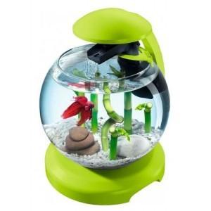 Aquarium Tetra cascade globe Verte 291235