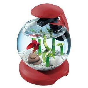 Aquarium Tetra cascade globe Bordeau 300111