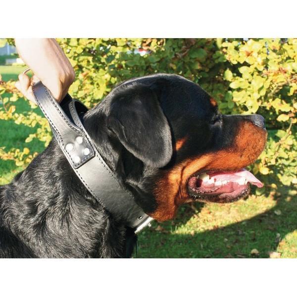 Collier chien double intervention 50mm / 85cm 572792