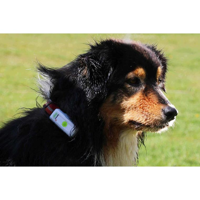 GPS Chiens - Weenect GPS dogs 2  648690