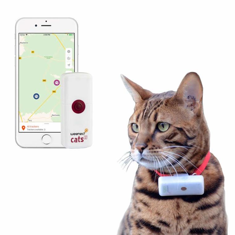 GPS Chats - Weenect GPS cats 2 648691