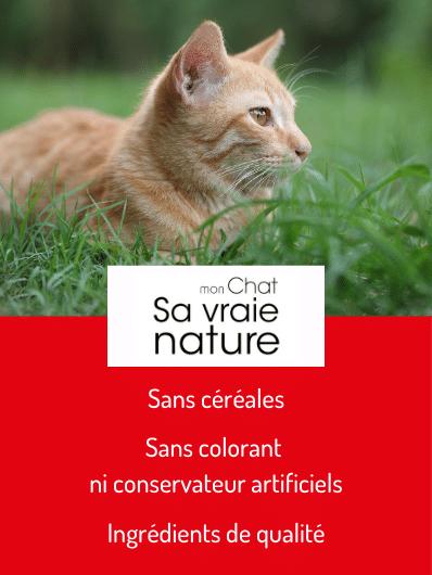 Mon Chat - Sa Vraie Nature